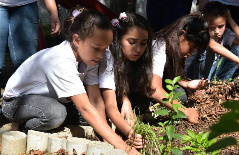 Crianças aprendendo a trabalhar com a terra, cultivando a própria horta